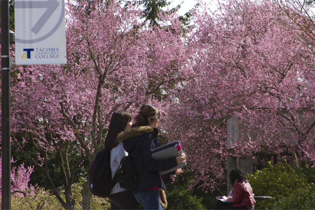 Two women walking with books and one woman seated at a table against a backdrop of pink flowering plumb trees